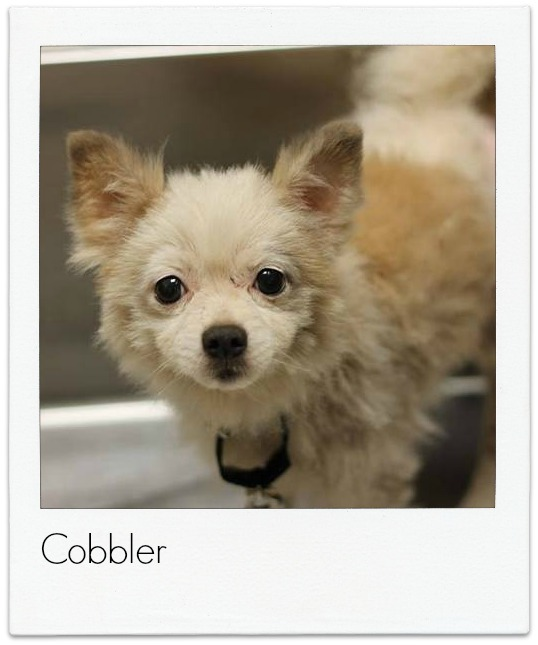 Cobbler_Dog_Polaroid